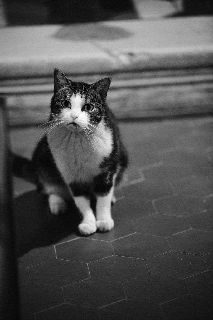 un chat dans l'eglise